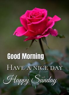 Good Morning Beautiful Quotes, Good Morning Inspiration, Good Morning Gif, Good Morning Flowers, Good Morning Greetings, Good Morning Wishes, Good Morning Images, Good Morning Quotes, Sunday Morning