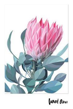 Protea Art, Australian Native Flowers, Australian Artists, Art And Illustration, Illustrations, Plant Art, Art Floral, Ink Drawings, Botanical Art