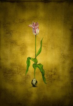 tulip with root by esraart