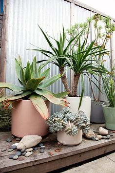 Soft coloured plant pots in cinnamon, green and grey and plants plants plants