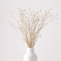 Card Dried Flower Bouquet, Dried Flowers, Flower Vases, Fresh Flowers, West Elm, Natural Bouquet, Feeds Instagram, Cleaning Dust, Faux Plants