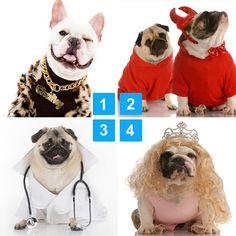 "@Blabla Car's photo: ""What's your favourite costume?? #Halloween #costume #cute #dogsofinstagram"""