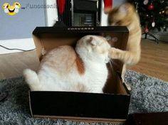 cute pets - cat funny #pet #baby - Funomenia