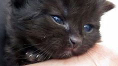 Kitten floating out to ocean was brought in to safety by three New Zealand teenagers.