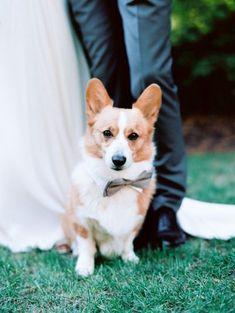 Bowtie clad Corgi: Rustic Summer Wedding | Photography: Tanja Lippert