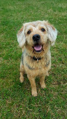 Hunde Foto: Jasmine und Malik - Bitte lächeln😉 Hier Dein Bild hochladen: http://ichliebehunde.com/hund-des-tages  #hund #hunde #hundebild #hundebilder #dog #dogs #dogfun  #dogpic #dogpictures