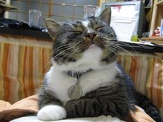 The contrarian: | The 25 Worst Cats In The World
