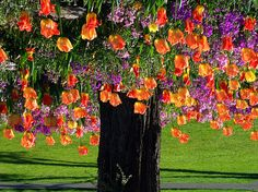 # The Tulip Tree | Flickr - Photo Sharing!