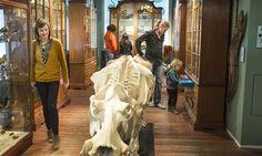 Utrecht, Teaching Art, Lion Sculpture, Statue, Sculpture, Sculptures