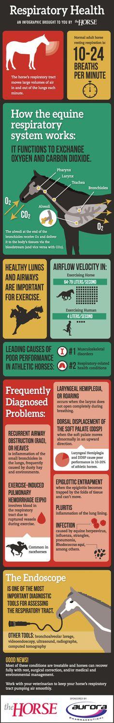 Respiratory Health  Infographic