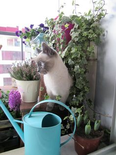 Siamese kitty.  Cute cat. Plants.