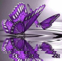 Purple butterfly/reflection.