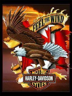 Harley Davidson Wallpapers Screensavers Free Herley Motors Screensaver Mobile Cell