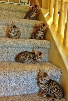 A staircase of cuteness/ What R U STAIR-ing at?