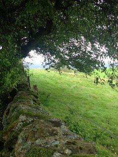 My Beautiful Edinburgh blog, shares a hidden farm in the Galloway Hills of Scotland.