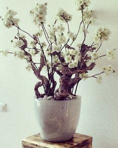 Bloesem in pot. Voor info en vragen, www.Annefleurs.nl Blossom Trees, Floral Arrangements, Vase, Wallpaper, Beautiful, Home Decor, Home Decor Ideas, Decorating Ideas, Tropical Floral Arrangements