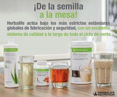 , Come to visit my Herbalife Distributor Website! Herbalife Shake Recipes, Herbalife Recipes, Herbalife 24, Herbalife Nutrition, Health And Nutrition, Healthy Life, Healthy Living, Eating Healthy, Herbalife Distributor
