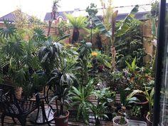 Tropical Houses, Indoor Garden, Garden Landscaping, Bali, Gardens, London, Landscape, Plants, Tropical Homes