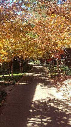 A beautiful fall day in #Sedona! #lauberge #fallcolors