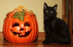 6 Exciting Things To Do In London for Halloween - London Expats Guide Halloween London, Halloween Cat, Epic Halloween Costumes, Cat Costumes, Crazy Cat Lady, Crazy Cats, Autumn Rain, Things To Do In London, Warm Sweaters
