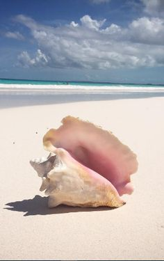The peacefulness and beauty of the Pink Sand Beach, Harbour Island, Bahamas…