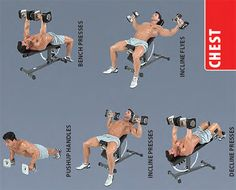 dumbbell-chest-exercises Chest Workouts, Gym Workouts, Chest Exercises, Fitness Diet, Health Fitness, Workout Fitness, Full Body Dumbbell Workout, Workout Dumbell, Workout Posters