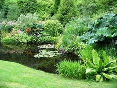 mokřad, vodní rostliny, zahradní jezírko jak vybudovat, jako substrát doporučuje jíl
