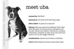 Meet former Michael Vick pit bull Uba - Limited Edition Print  The Photo Book Projects    $49.00 USD