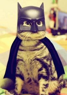 He fights for justice and catnip!
