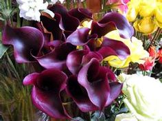 Image detail for -Daily Beauty -Purple Lilies