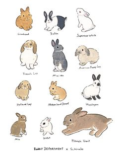 Acrylic Paint by Schinako Moriyama. Schinako Moriyama is an illustrator as bunny art from Fukushima, Japan Continue reading and for more Acrylic art→View Website Rabbit Drawing, Rabbit Art, Pet Rabbit, Dwarf Rabbit, Cute Animal Drawings, Animal Sketches, Cute Drawings, Lapin Art, Baby Animals
