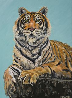 Resting Tiger Print By Rachelle Purych