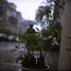 https://flic.kr/p/Cu7LG2   小巷雨中@民生社區 晚上看了阮義忠的'正方形的鄉愁' 突然好想拿錄徠或是哈蘇來拍照。 先找一張舊作來止止渴。 下雨天的小巷裡,遠方打傘的人,前方的盆栽,模糊的背影,想像我在京都的巷子裡。 Rolleiflex, Fujifilm RDP3. #每日一圖 #dailyfoto #rolleiflex #fujifilm #rdp3 #minshengcommunity #taipei #taiwan
