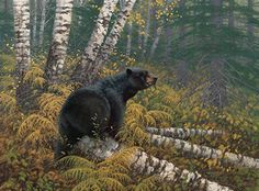 Northwoods-Black Bear Art Print by Michael Sieve Bear Paintings, Wildlife Paintings, Wildlife Art, Original Paintings, Bear Pictures, Animal Pictures, Bear Art, Black Bear, Spirit Animal