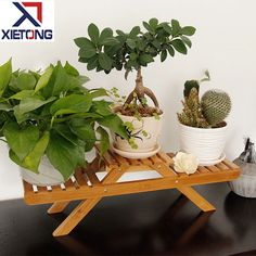 Tabletop Bamboo Plant Display Stands Indoor , Find Complete Details about Tabletop Bamboo Plant Display Stands Indoor,Plant Stands Indoor,Bamboo Plant Display Stands,Tabletop Bamboo Plant Stands from Storage Holders & Racks Supplier or Manufacturer-Fujian Xietong Technology Co., Ltd. Indoor Bamboo Plant, Bamboo Plants, Indoor Plants, Vendor Displays, Display Stands, Plant Stands, Tabletop, Planter Pots, Technology