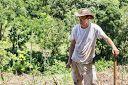 Planting Pineapple in Naturewalk 3 http://costarica-invest.blogspot.ie/2014/08/planting-pineapple_22.html