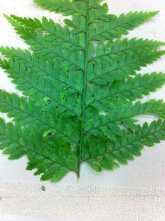 23 best haku plants images spanish moss cups mugs