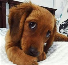 Funnycuteanimals