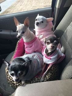 Cute Dogs All Dressed Up