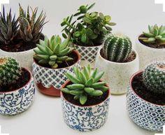 Bowl's cactus Succulents, Plants, Garden, Gardens, Succulent Plants, Plant, Gardening, Home Landscaping, Planets