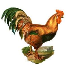 Rooster Pictures to Print - Bing Images
