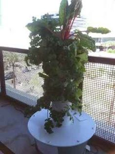 An aeroponic tower garden being used as a balcony garden growing fresh food on the balcony.