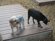 Last days of summer outside at Head To Tail Pet Wellness Center.