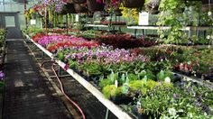 Shaughnessy Gardens, just outside of Saskatoon on Valley Road, has a beautiful selection of annuals and perennials, trees, and landscaping hard goods!