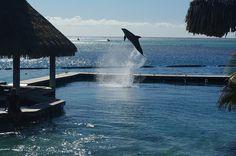 Happy Dolphin at InterContinental Moorea Resort and Spa Dolphin Center | Flickr - Photo Sharing!