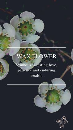 Flower Symbol, Wax Flowers, Lasting Love, Symbols, Plants, Plant, Glyphs, Planets, Icons