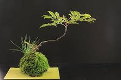 Billedresultat for kokedama