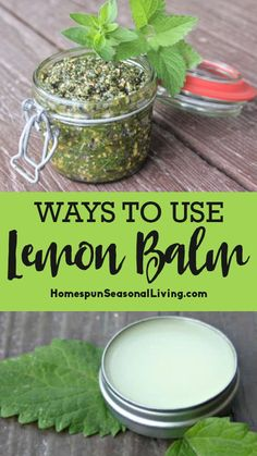 The lemon balm plant is a thick and bushy perennial herb. Because it is in the mint family it can be almost invasive in many home gardens. Thankfully, there is no shortage of lemon balm uses. Lemon Balm Recipes, Lemon Balm Uses, Herb Recipes, Healing Herbs, Medicinal Herbs, Natural Healing, Natural Health Remedies, Herbal Remedies, Do It Yourself Food