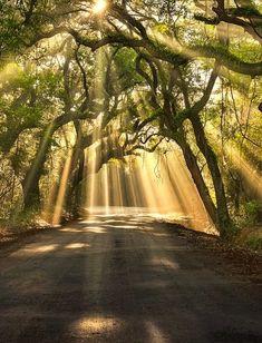 Botany Bay Road, Edisto Island South Carolina