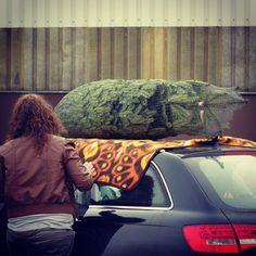 #weihnachtsbaum #gekauft #baum #christbaum #weihnachten #christmas #linz #auto #audi #lnz #linzpictures #schwertransport #heavy #loaded #christmastree #tree #urfahranermarkt #losgehts